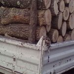 10:46 Constănțean, prins cu lemne fără acte la Novaci