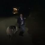 Jurnalist fugărit de un PORC în timpul unei transmisiuni live. VIDEO