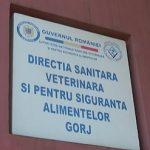 Corpul de Control al prefectului, la DSV Gorj. Călescu: NU avem suspiciunea că s-a vândut carne cu PESTĂ