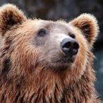 17:30 Pui de urs, prins în laţ în comuna Muşeteşti