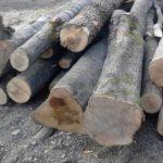 10:43 Bărbați din Aninoasa și Plopșoru, prinși la furat de lemne