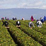 12:42 Italia, în criză după plecarea muncitorilor români
