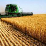 07:12 Producători: România produce de două ori mai mult grâu decât consumă