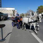 În absența turiștilor, birjarii vienezi livrează mâncare