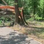 14:16 VIDEO. Copaci doborâți de vântul puternic în Parcul Central
