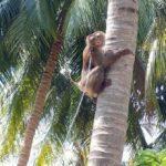 Produsele culese de maimuţe, scoase din supermarketuri
