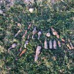 12:02 Muniție din timpul celui de-al Doilea Război Mondial, găsită la Tetila. Atenționare ISU Gorj