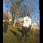 10:44 S-au ales cu dosar penal după ce au lovit un cal