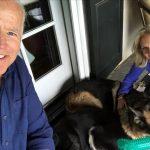 Animalele de companie revin la Casa Albă: Champ şi Major, câinii familiei Biden