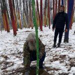 Artiștii au revenit în Pădurea Colorată. Au plantat puieți de stejar