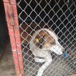 09:55 Dosar penal în urma eutanasierii câinilor din padoc