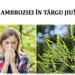 09:43 Ce amenzi riscă târgujienii care nu-şi curăţă terenurile de ambrozie