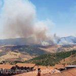 08:47 Sicilia declară stare de urgenţă pentru şase luni din cauza incendiilor de vegetaţie
