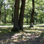 Vrea barieră și camere de luat vederi la intrarea în Pădurea Drăgoieni
