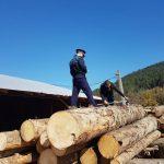 11:44 Verificări la depozitele de lemne din Târgu-Jiu. Poliția a aplicat amenzi