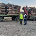 12:30 Transporturile de lemne, în vizorul polițiștilor gorjeni